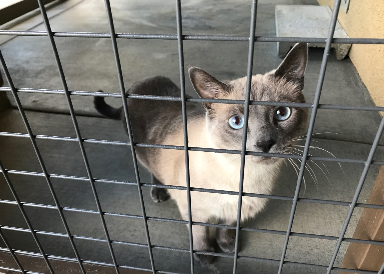 Orange County Catio Cat