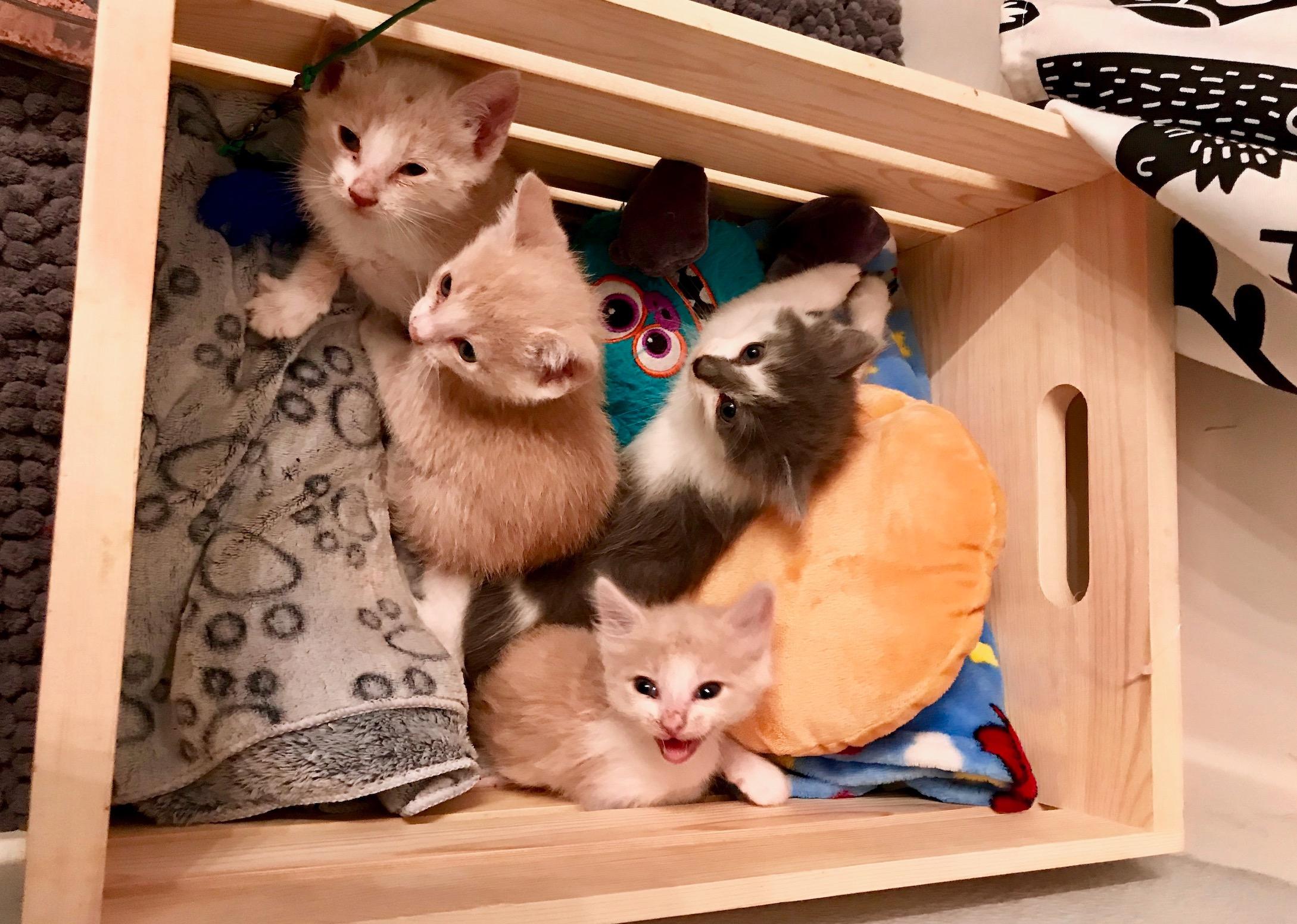 Sylmar Kittens