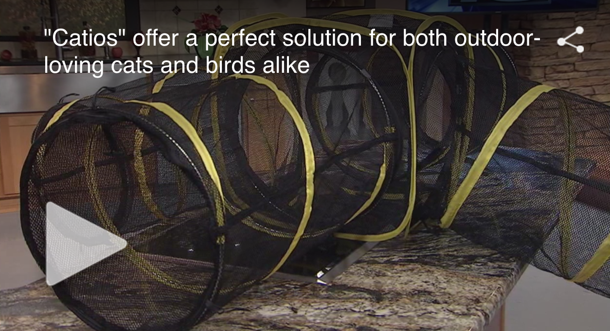 KRQE News 13: Catios Perfect Solution for Cats and Wildlife