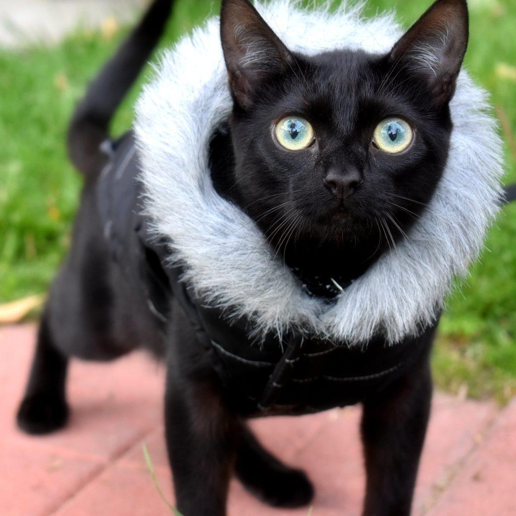 Ciaran the cat