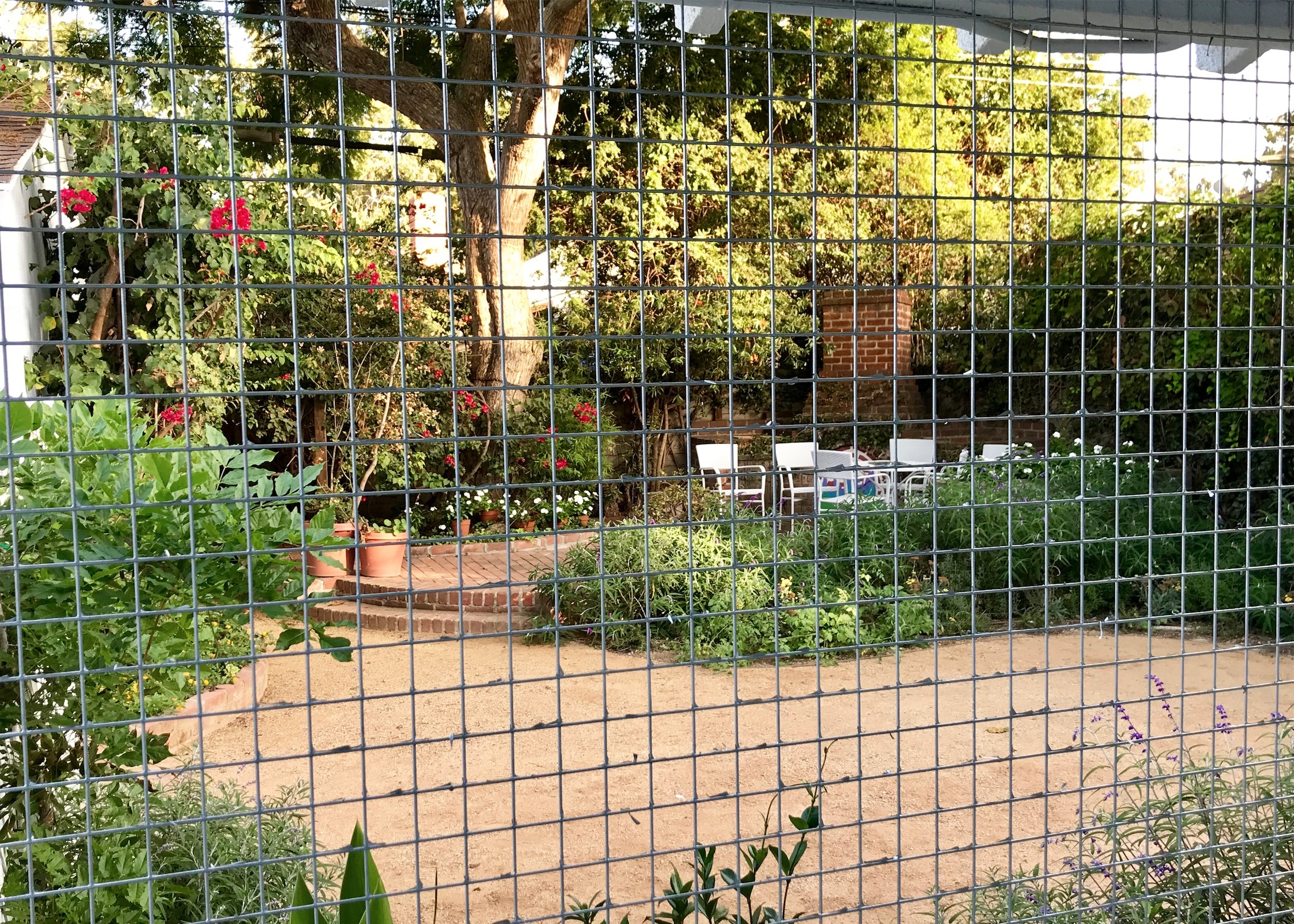 Culver City Catio Enclosure View