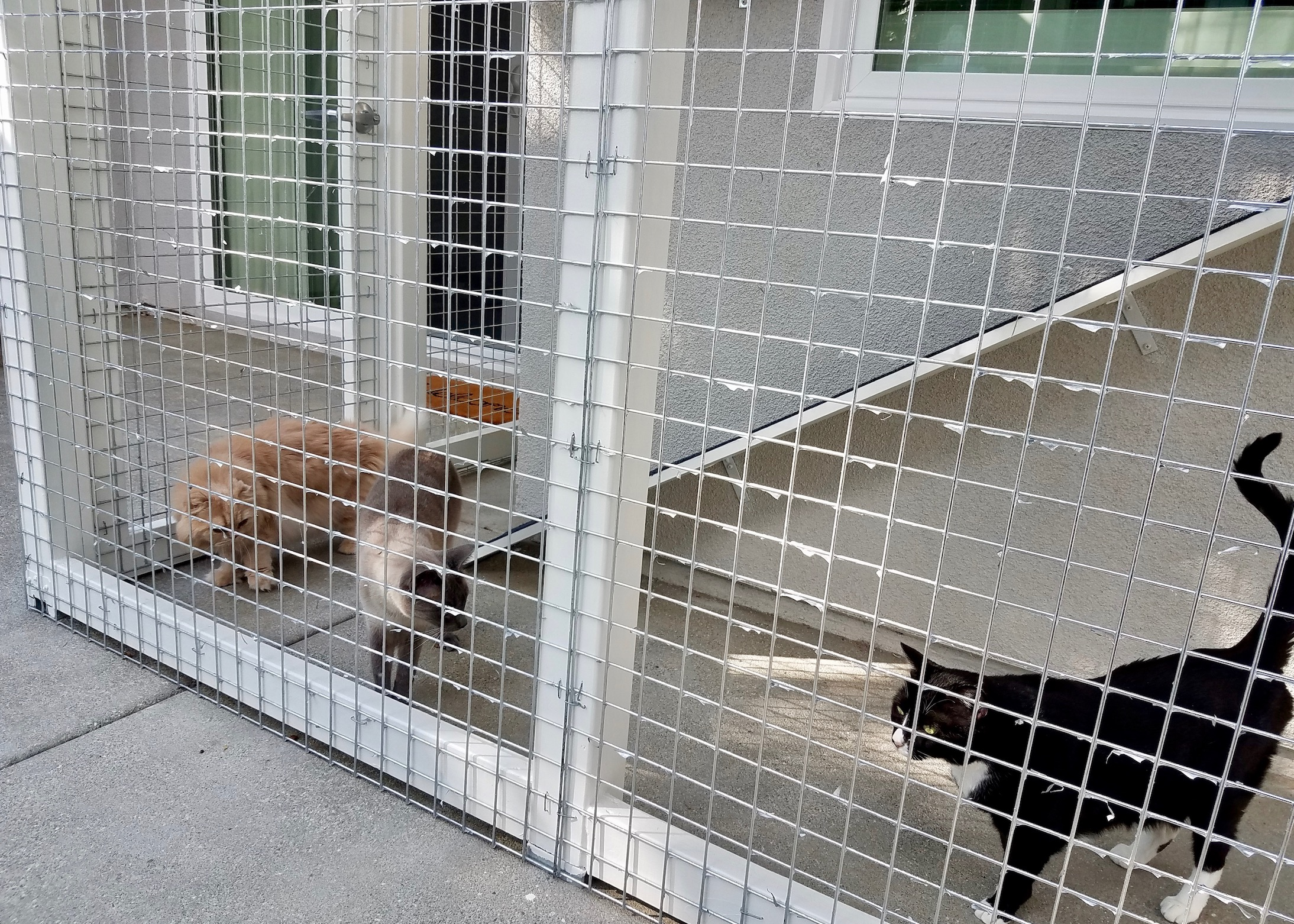Placentia Catio Enclosure Cats