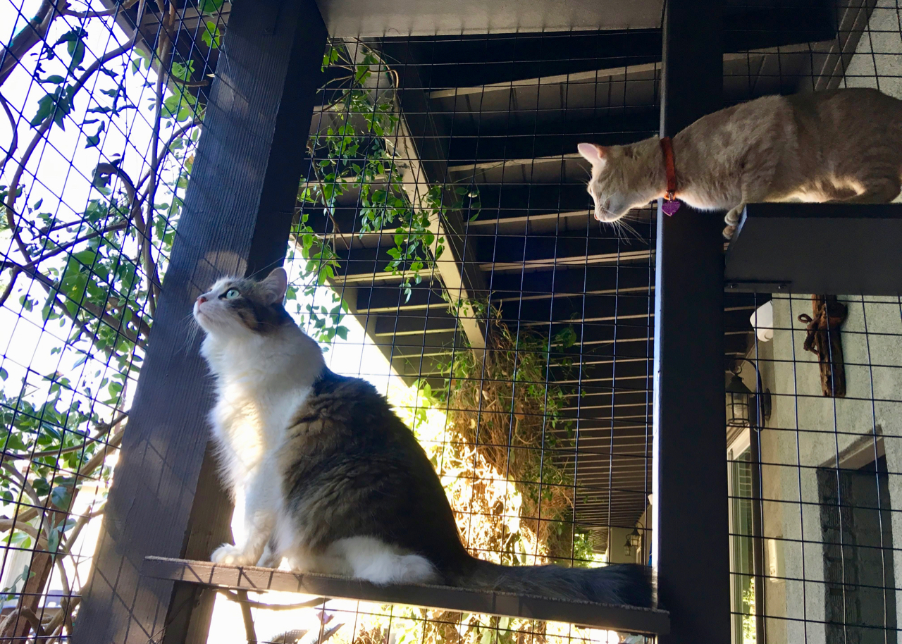 Cats enjoying Northridge Catio Enclosure