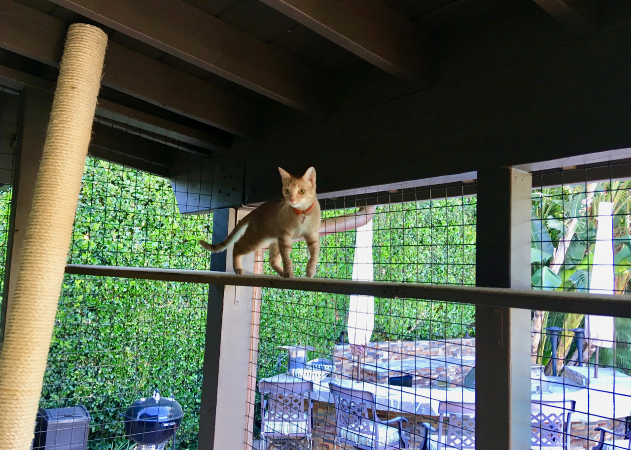 Summer on Top Shelf of Northridge Catio Enclosure