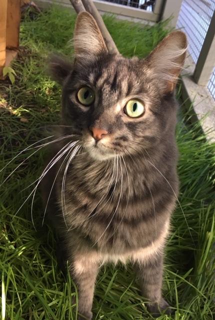 Cat in cat grass