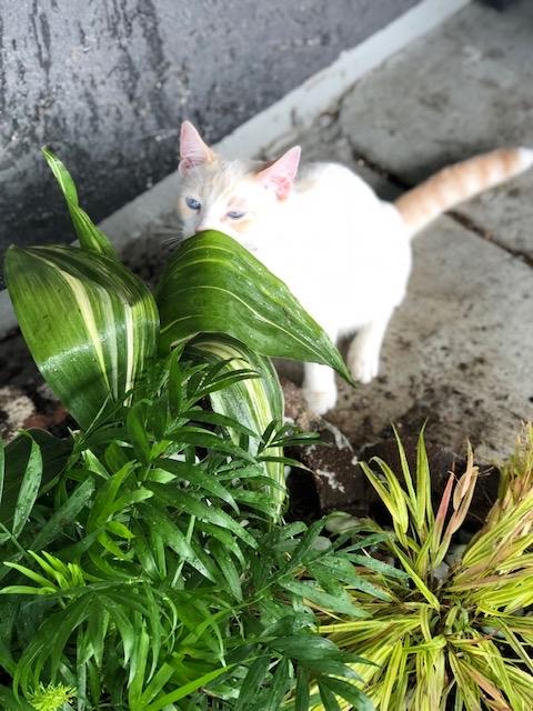 White cat enjoying catio plants