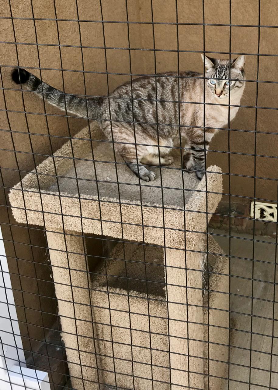 San Fernando Catio Cat Enclosure