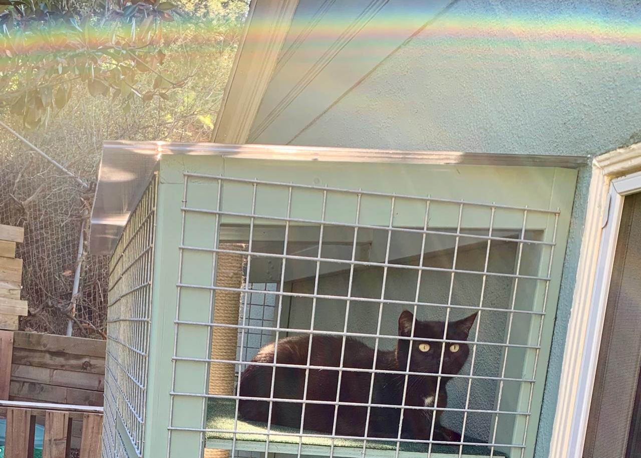 Laurel Canyon Catio Cat